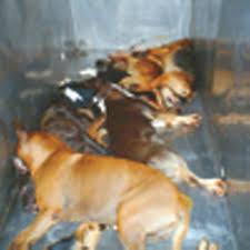 dog euthanasia animal euthanasia languish language carolina