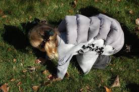 Family Halloween Costumes With Dog by Handmade Halloween Kiddo Costume Tips With Family Ever After