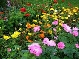 flower garden tiny farm blog