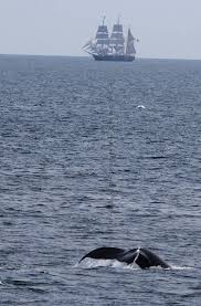 Whale Watches Cape Cod - cape cod whale watching 2014