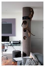 Modern Cat Trees Furniture by 21 Best Cat Stuff Images On Pinterest Cat Stuff Cat Trees And Cats