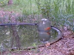 Backyard Fish Pond Ideas Awesome Aquarium And Fish Pond Ideas For Your Backyard