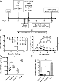Challenge And Herpes Targeting The Tract Mucosa With A Lipopeptide Recombinant