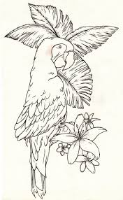parrot tattoo design stencil by dfalkcreative on deviantart