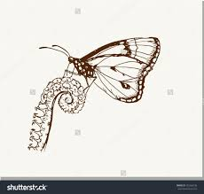 drawing of a butterfly on a flower hand draw butterfly on a flower