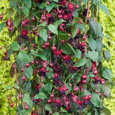 garden design garden design with climbing fig stock photography