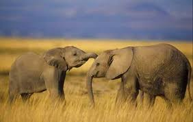 Blind Men And The Elephant Story For Children Top 10 Facts About Elephants Listverse