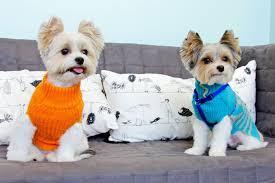 queen s dogs marie u0027s pet grooming