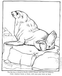 free printable sea life coloring pages sea lion coloring pages zoo animals sea lake u0026 shore