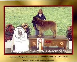 belgian sheepdog club of america national specialty new page 1