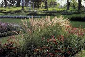 garden plans for ornamental grasses pdf