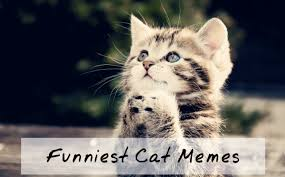 Cutest Memes - 10 funny cat memes 2015 cute cat pictures photos pics