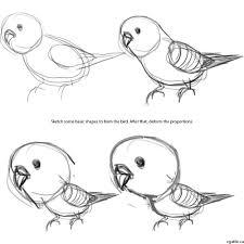 drawing a parakeet cartoon follow along to create a beautiful