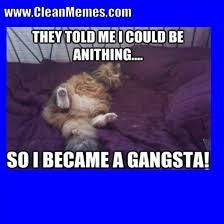 Clean Memes - cat memes clean memes