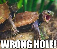 Wrong Hole Turtle Meme - wrong hole funny offensive turtles meme humor adult humor