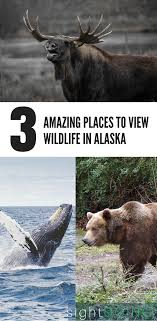 Where to see wildlife in alaska 3 awesome spots to include on