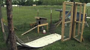 Chickens In The Backyard by Raising Backyard Chickens Youtube