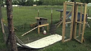 chickens in backyard raising backyard chickens youtube