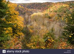 fall colors clear fork gorge northern ohio stock photo