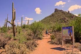an atypical desert solitaire binge driftingadventure nomads