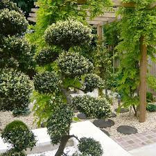 Topiary Cloud Trees - 55 best joanne alderson design portfolio images on pinterest
