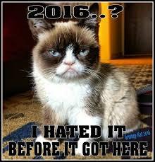 Grumpy Cat New Years Meme - 461 best funny memes w grumpy cat images on pinterest grumpy cat