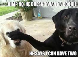 Meme Dogs - 7 funny dog memes and one gif to get the week started