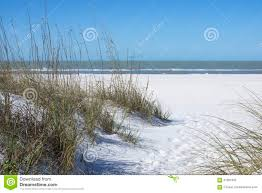 native plants grow on the sand dunes at this beach stock photo sand dunes and sea oats royalty free stock image image 26830696