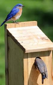 plans house free bird house plans bluebird purple martin wren more