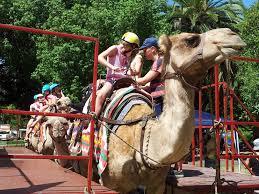 hyde park fair camel rides yelp