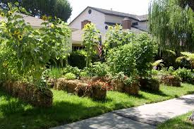 Front Yard Vegetable Garden Ideas Imagine Turning Your Front Lawn Into A Vegetable Garden Straw