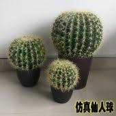 buy cactus plants wallet price in philippines find