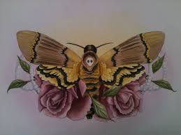 death u0027s head moth and roses u003c3 art by stacey baker pinterest
