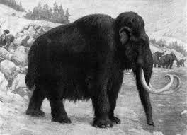 preserved woolly mammoth autopsy shows cloning