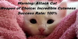 Success Cat Meme - funny cat memes and pictures about cat behavior hubpages