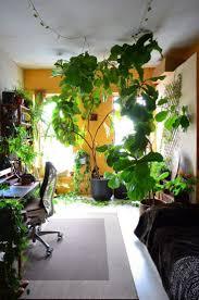 the best indoor plants plants that grow in the dark indoor flowering low light best small