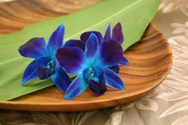 blue orchid flower color orchids with our aloha