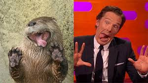 Cumberbatch Otter Meme - benedict cumberbatch imitates otters and gets a kiss from johnny