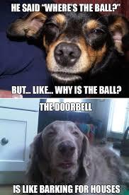High Dog Meme - somewhere over the rainbow house are dog philosophers friday
