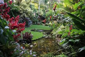 Tropical Flowers And Plants - various kind of tropical plants for tropical garden in the large