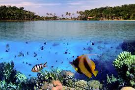 fish wallpaper murals wallpaper tropical sea level square wall murals