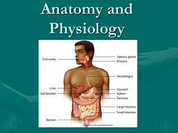 Images Of Human Anatomy And Physiology Anatomy Physiology Video Lectures Tutorials U0026 Courses