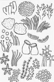 25 ideias exclusivas de coral reef plants no pinterest vida