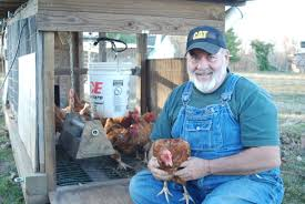 Benefits Of Backyard Chickens by Backyard Chickens Provide Many Benefits News