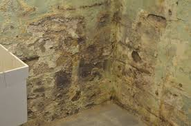 how to clean mold in basement home design