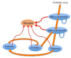 virus origins from what did viruses evolve or how did they
