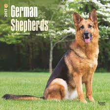 german shepherds calendar 2017 calendars pinterest german