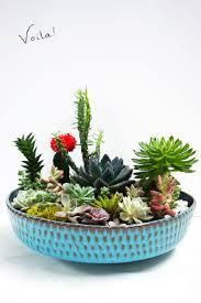 Succulent Plant 10 Fun Diy Projects With Succulent Plants