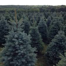 mcconnell u0027s nursery and christmas tree farm christmas trees