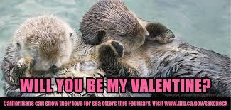 Sea Otter Meme - happy valentine s day to all our friends california sea otter
